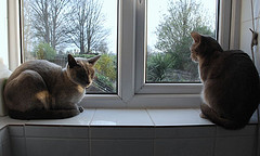 2-cats-in-window-by-polandeze-