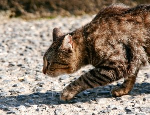 The Shocking And Sad Truth Is This Average Lifespan Of Outdoor Cats Usually No More Than Five Years Compare That With Well Cared For Indoor
