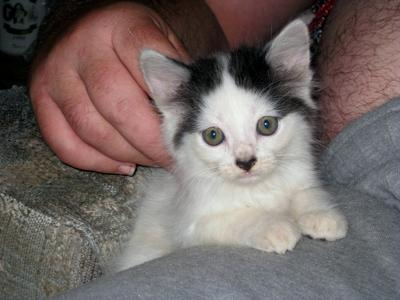 Butch-Kitty