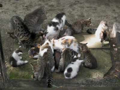 The Herd (can you pick out Butch-Kitty?)