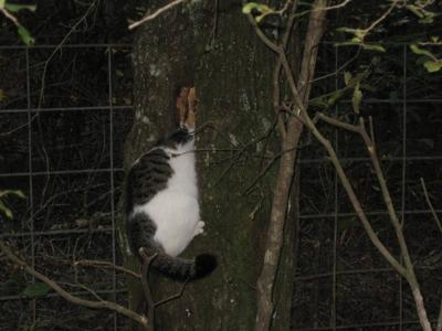 Rolo-in-a-Tree