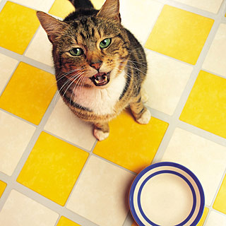 Best Raw Meat To Feed To Cat