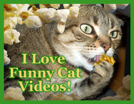 Funny Cat Videos Collection One Funny Videos Cats