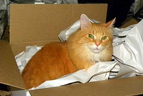 Schmoo in da Box