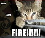 slingshot-cat-by-icanhazcheezeburger.com