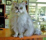 Lancelot-at-vet-photo-by-herberouge-1-somewhere-over-the-rainbow