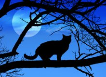 Cat Mythology, a History of Felines in Folklore and Legend